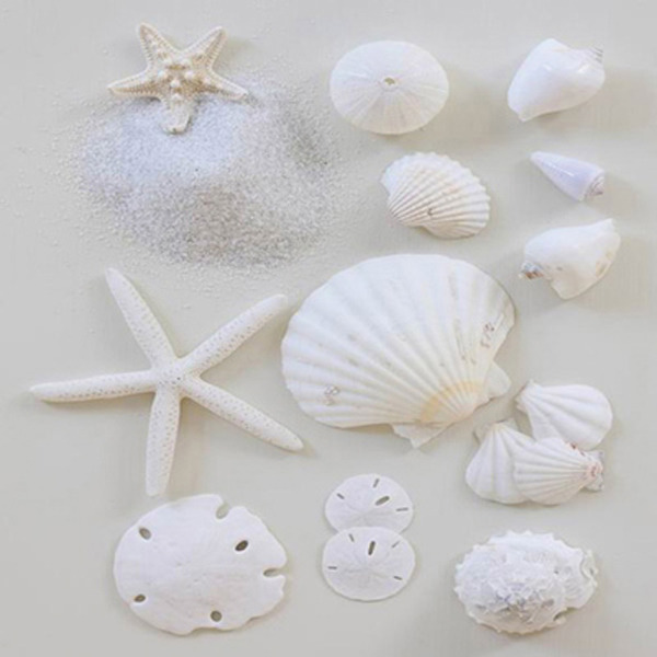 Canvas Print White Starfish Shells (set of 3) 40x40x2cm