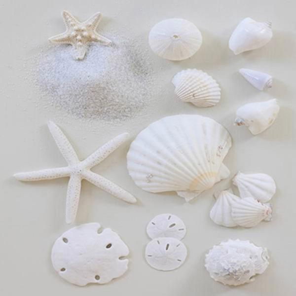 Canvas Print White Starfish Shells (set of 3) 40x40x2cm